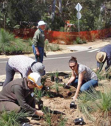 Volunteers replanting grasses in Section 175 near the carpark