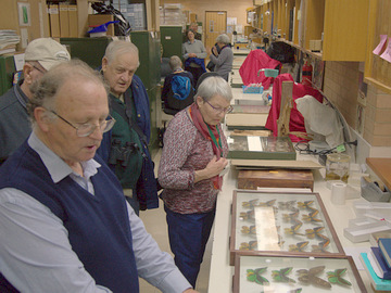National Insect Collection visit: Dr Ted Edwards showing exhibits. Photo: Fanny Karouta-Manasse.