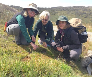 Julie Percival, ANBG Threatened Species Officer, Mary Lovett, ANBG-JMAG Seedy Vol and Millie Stevens, NSB Research Technician collecting alpine species Kosciuzsko National Park, March 2020 (Photo: T.North, ANBG)