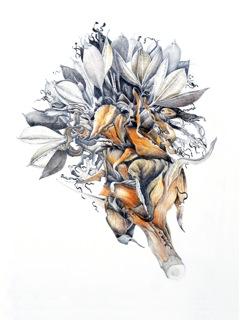 Doryanthes excelsa - Morgyn Phillips