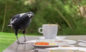 'Birds behaving badly' by Elizabeth Kay