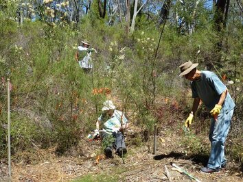 A previous weeding work party at ANBG. Photo credit is Rosemary Purdie