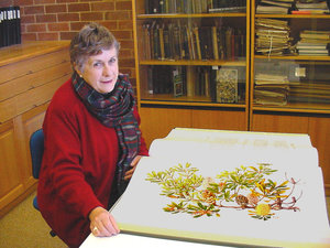 Celia Rosser with a volume of The Banksias. Photo: M.Fagg, ©Australian National Botanic Gardens 2001