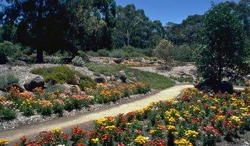 A recent Friends project: Asteraceae Garden (Photo: Murray Fagg ANBG)