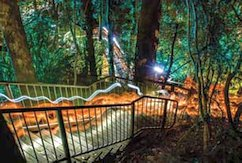 Luminous Botanicus - lights paths in the rainforest